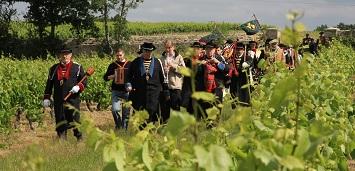 Défilé dans les vignes